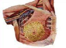 超声显像在胸部疾病的诊断中有何价值